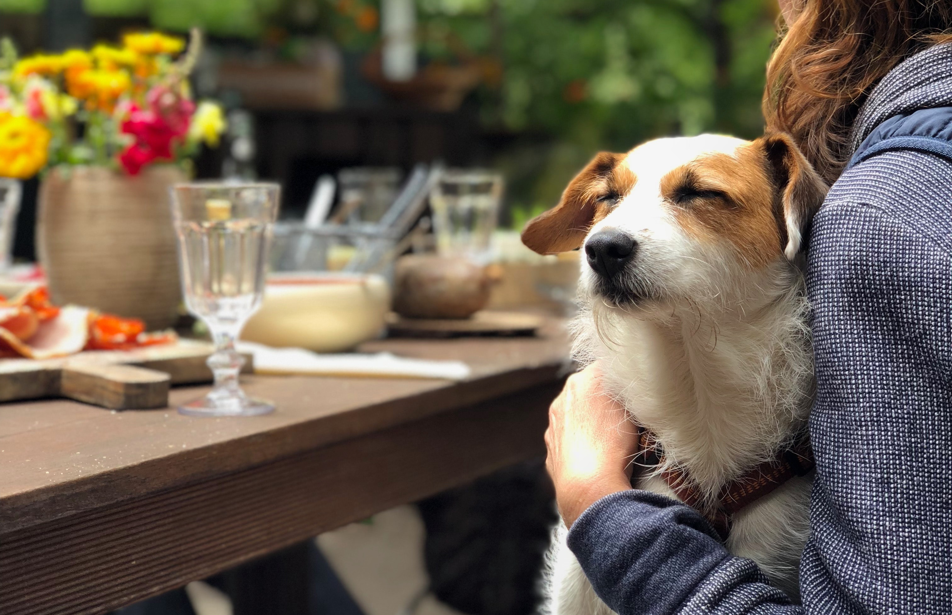 Should you take your nervous dog to a dog friendly place? - Dog Furiendly