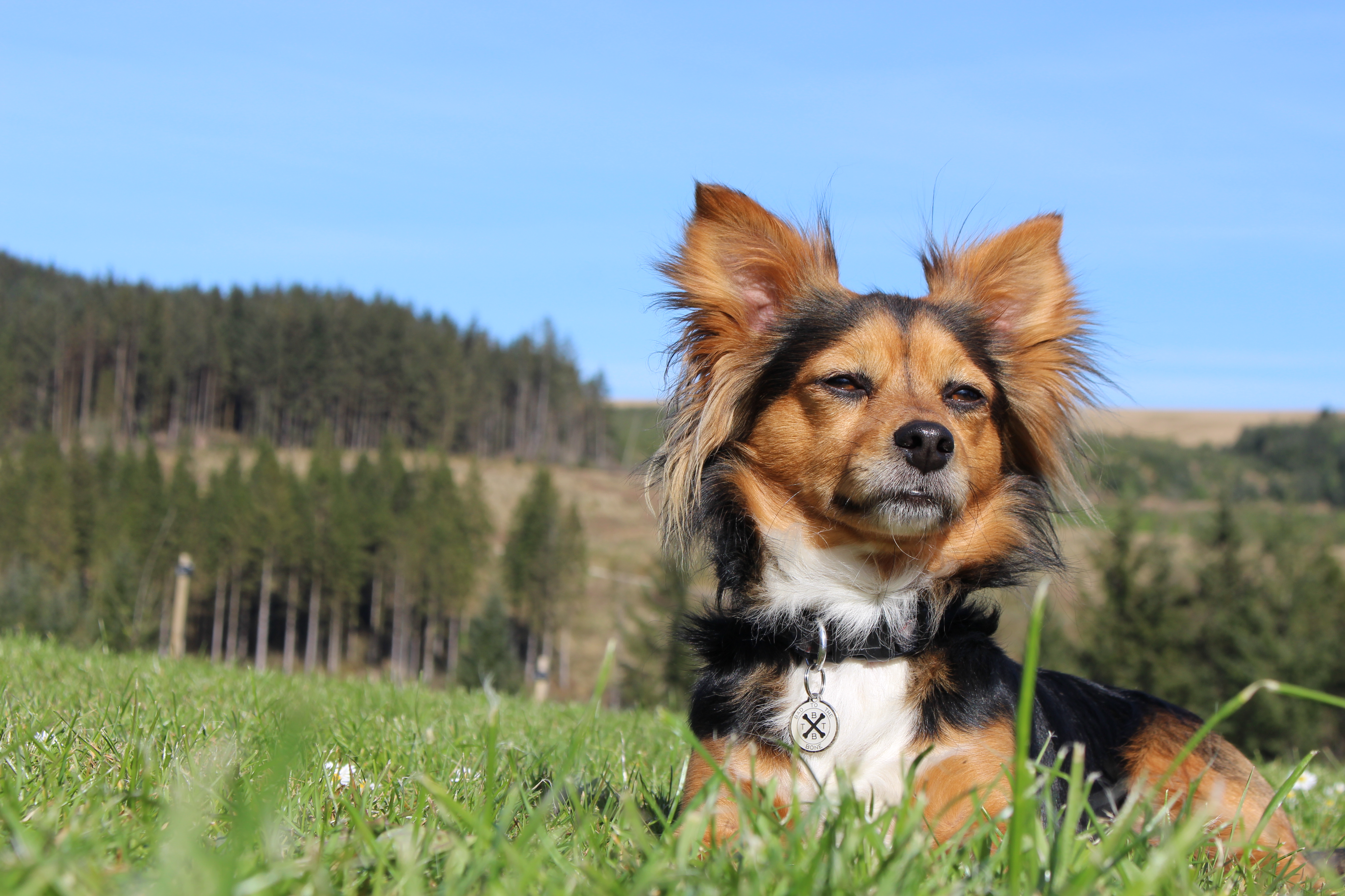The 10 most popular dog names in Wales