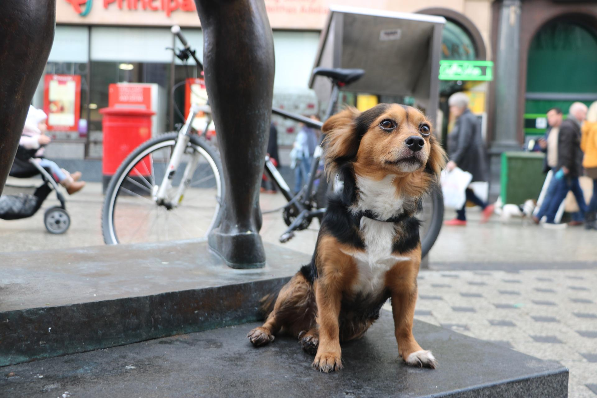 A Dog Friendly Day Out in Cardiff City Centre