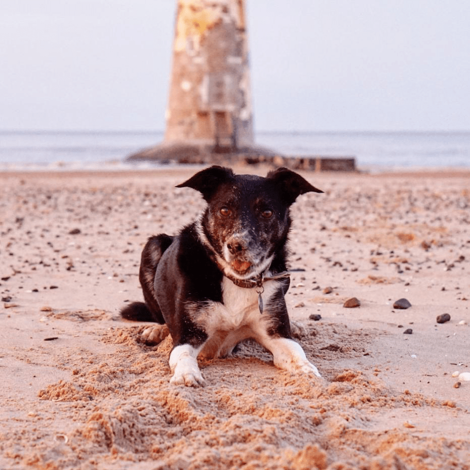 Milo's Top 5 Dog Friendly Finds