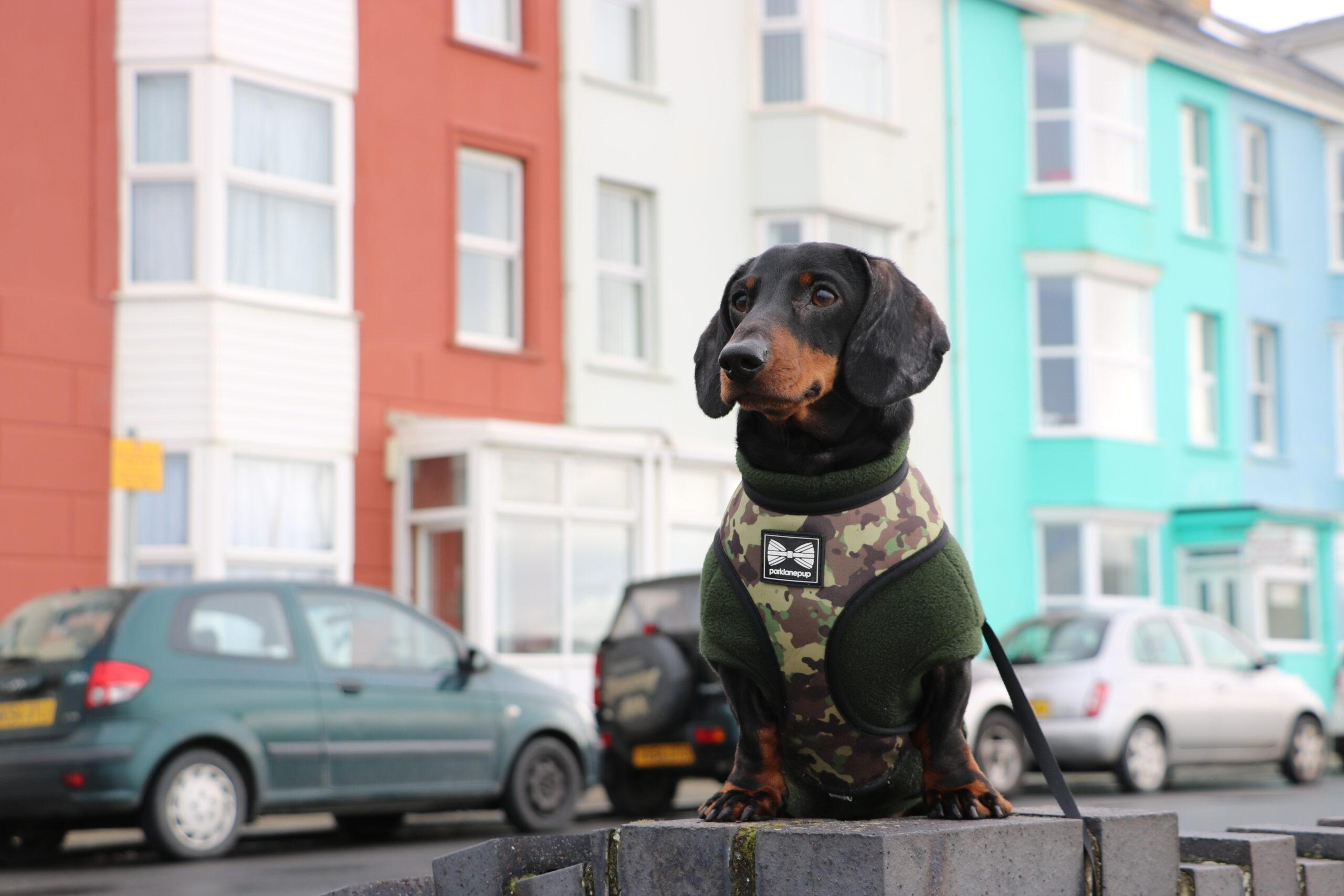 Seth's Guide to a Dog Friendly Holiday in Aberystwyth