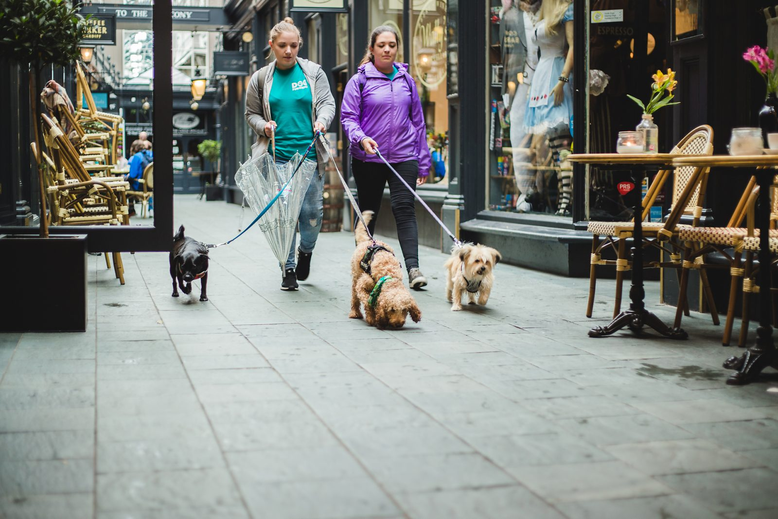 Dog Friendly Shops To Visit This Christmas