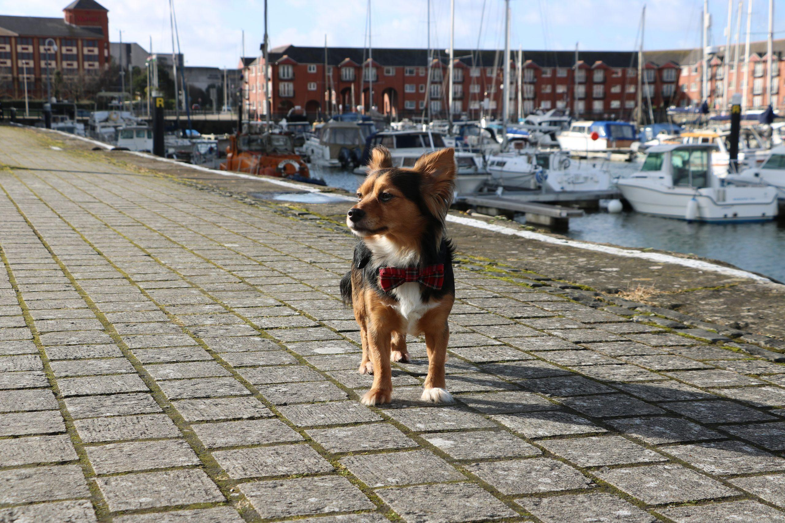 Our Guide to Dog Friendly Swansea