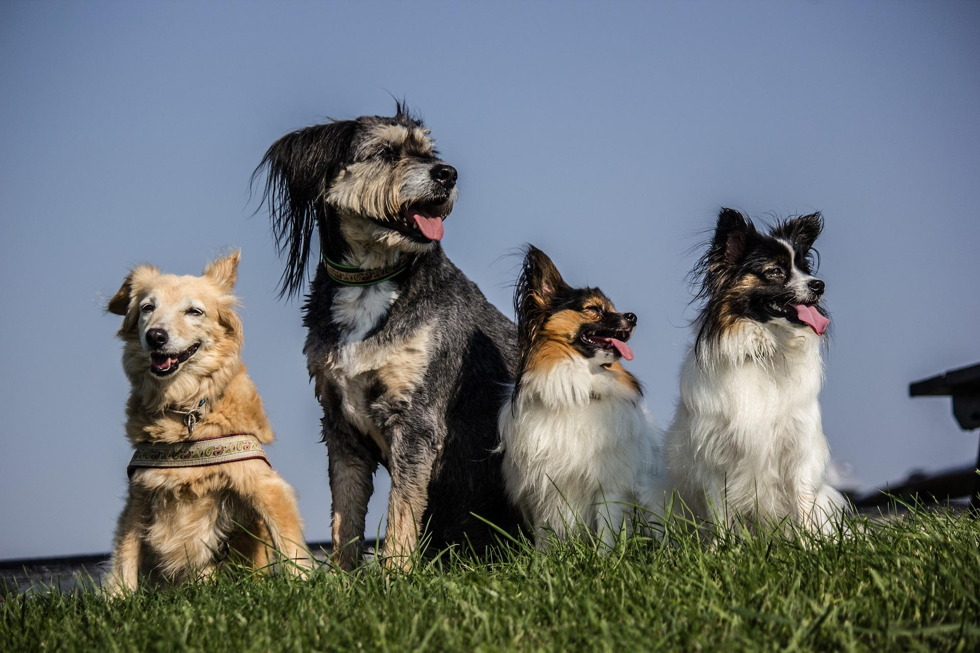 Britain's Top 10 Favourite Dogs