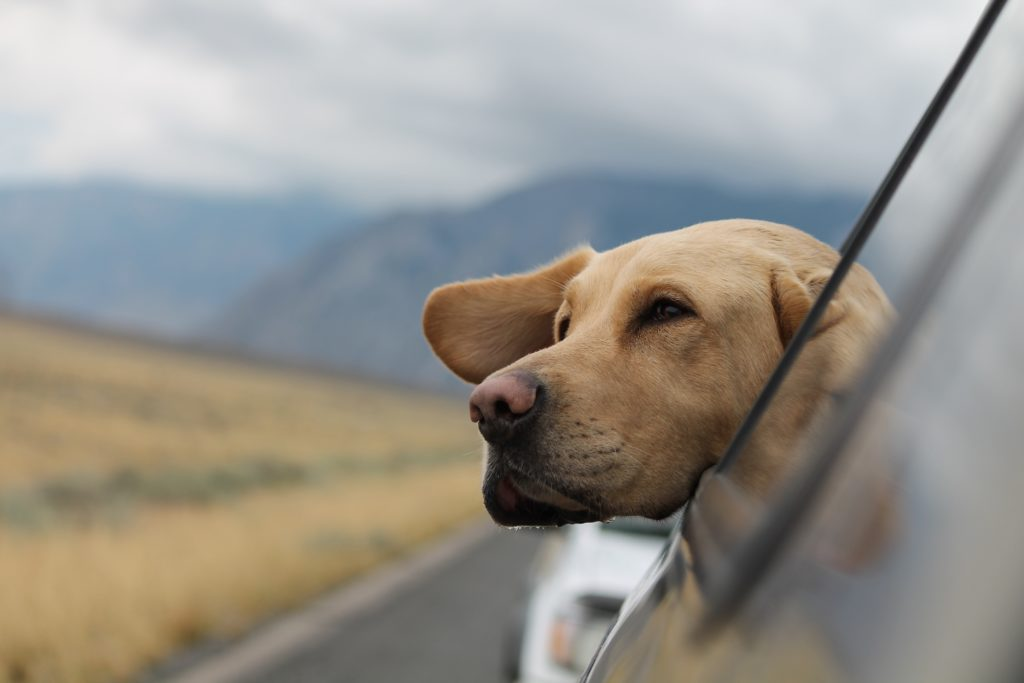 Travelling with your dog