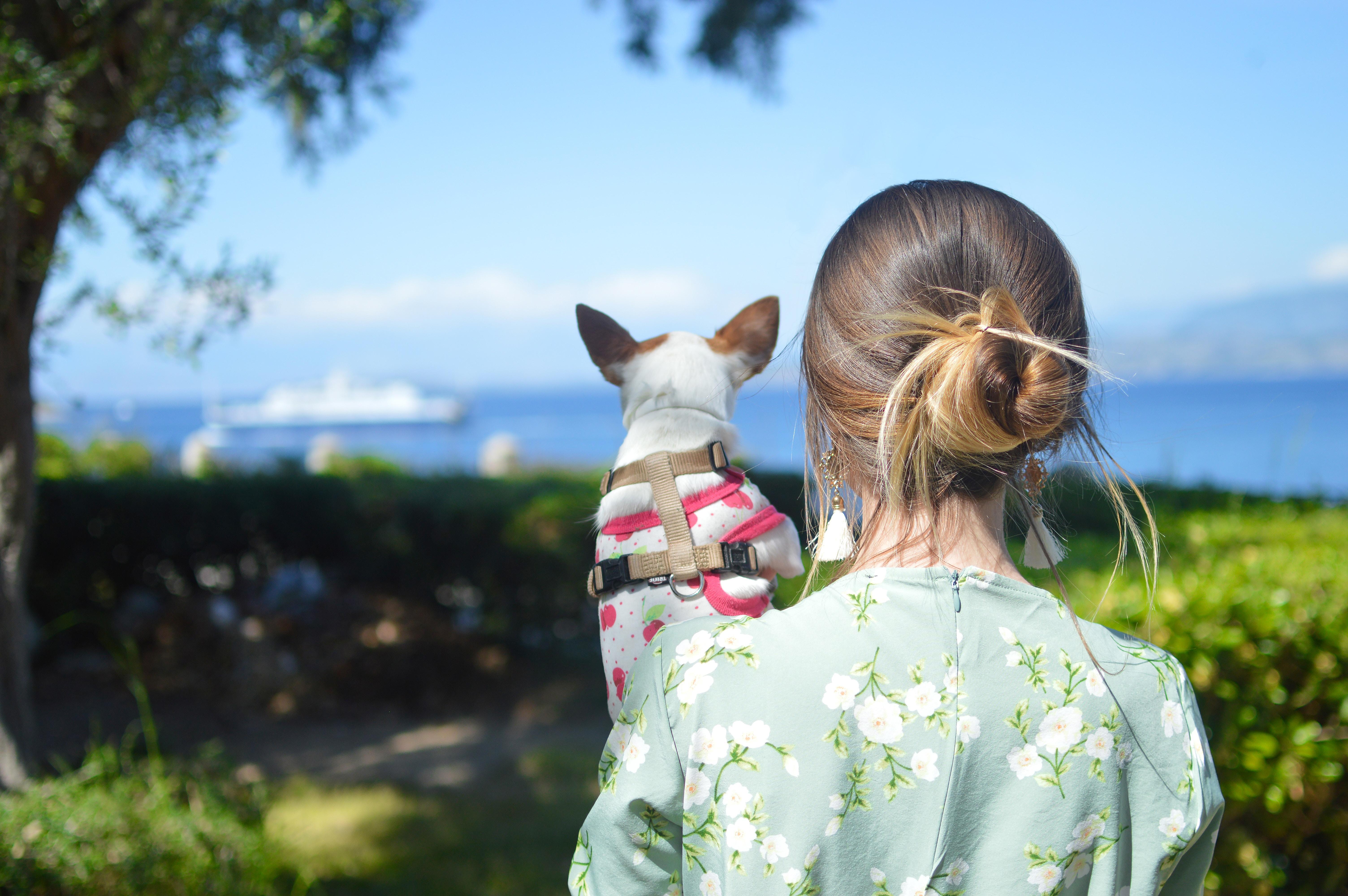 How to get a pet passport?