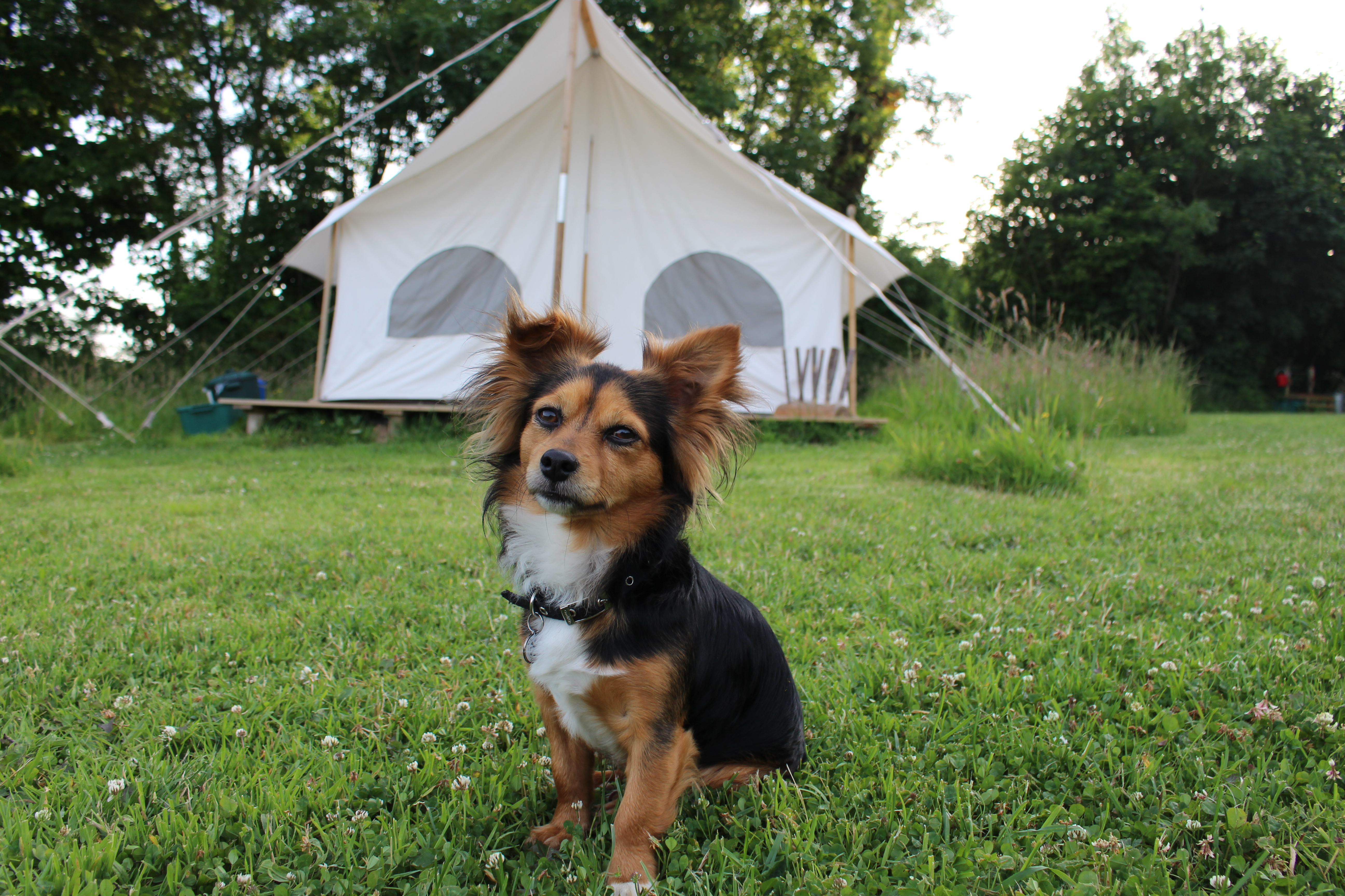 Dog Friendly Glamping at Top of The Woods