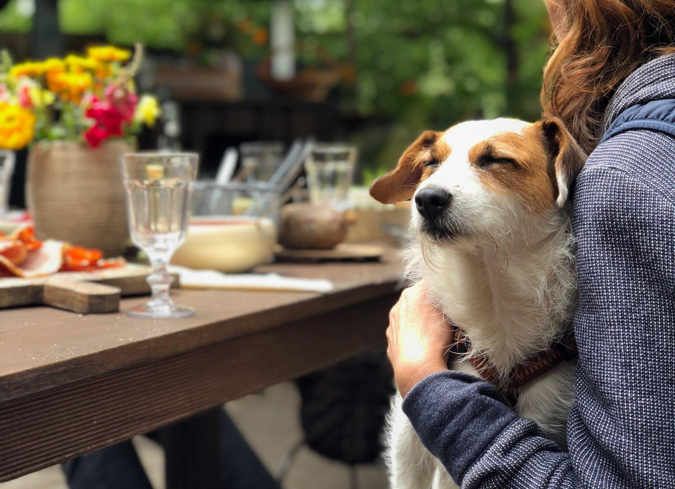 9 Dog Friendly Beer Gardens in the UK
