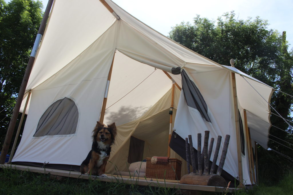 6 Tips For Happy Camping With Your Dog