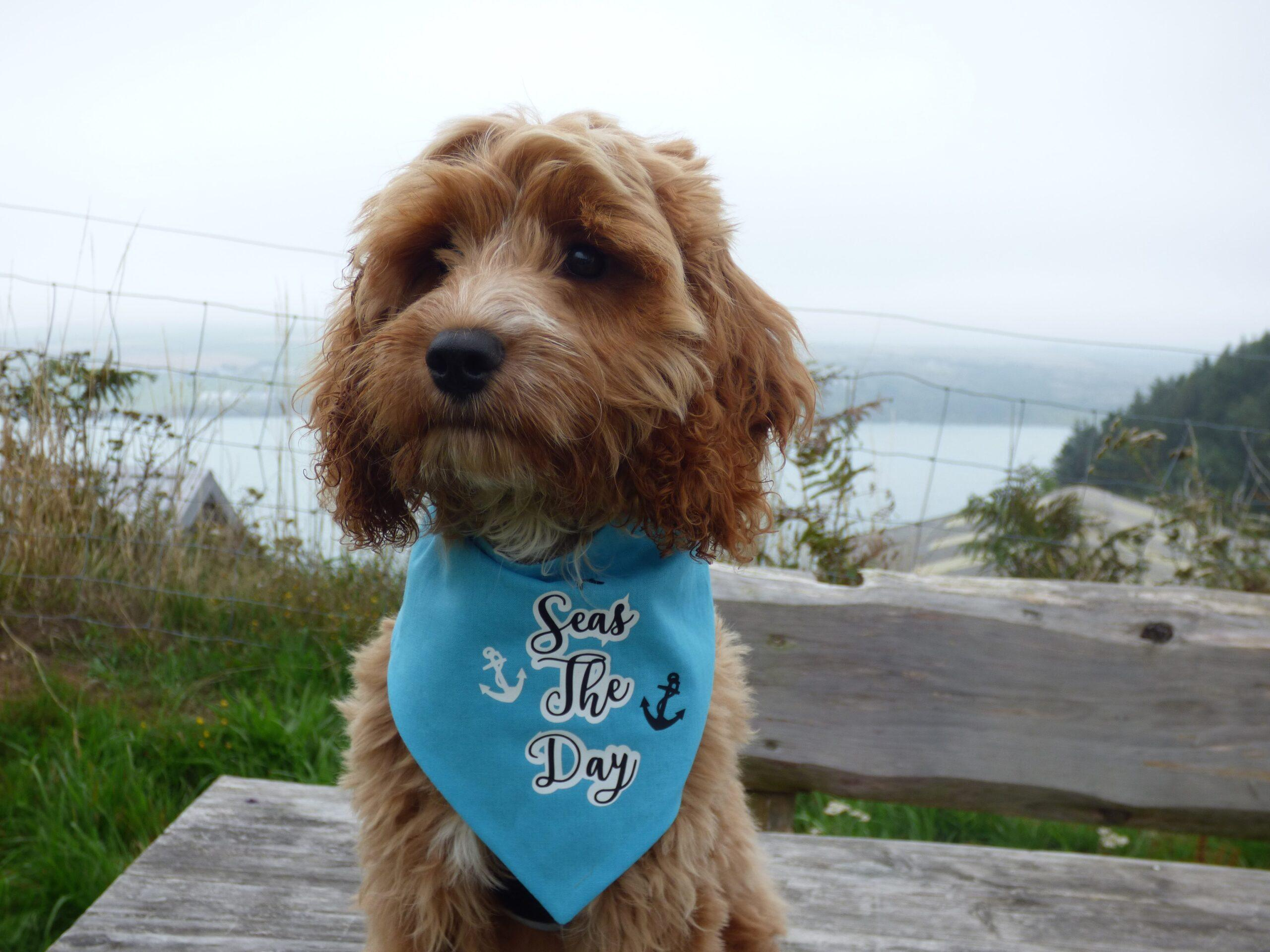 Duke's First Dog Friendly Camping Holiday in Pembrokeshire