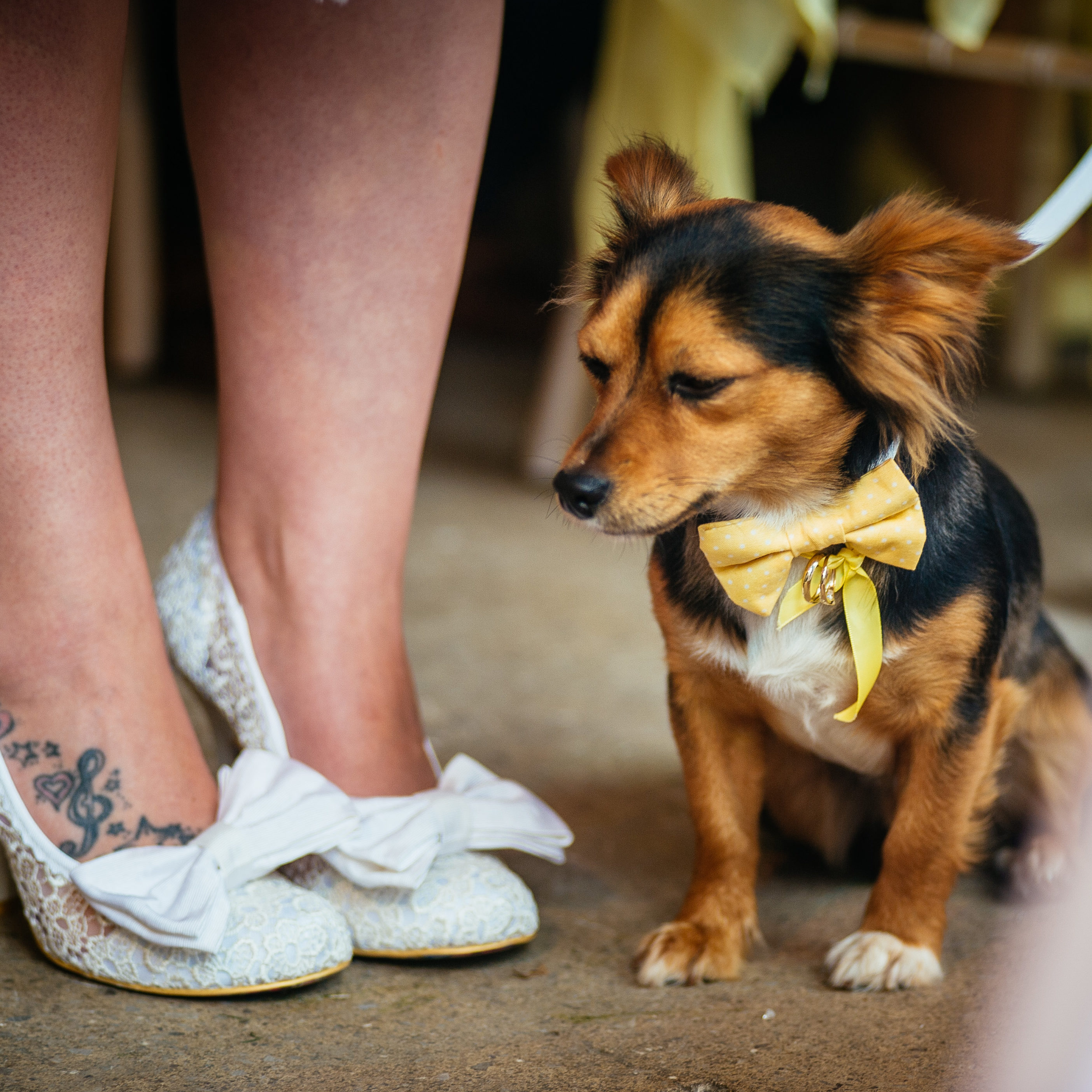 Our Dog Friendly Wedding at Rosedew Farm