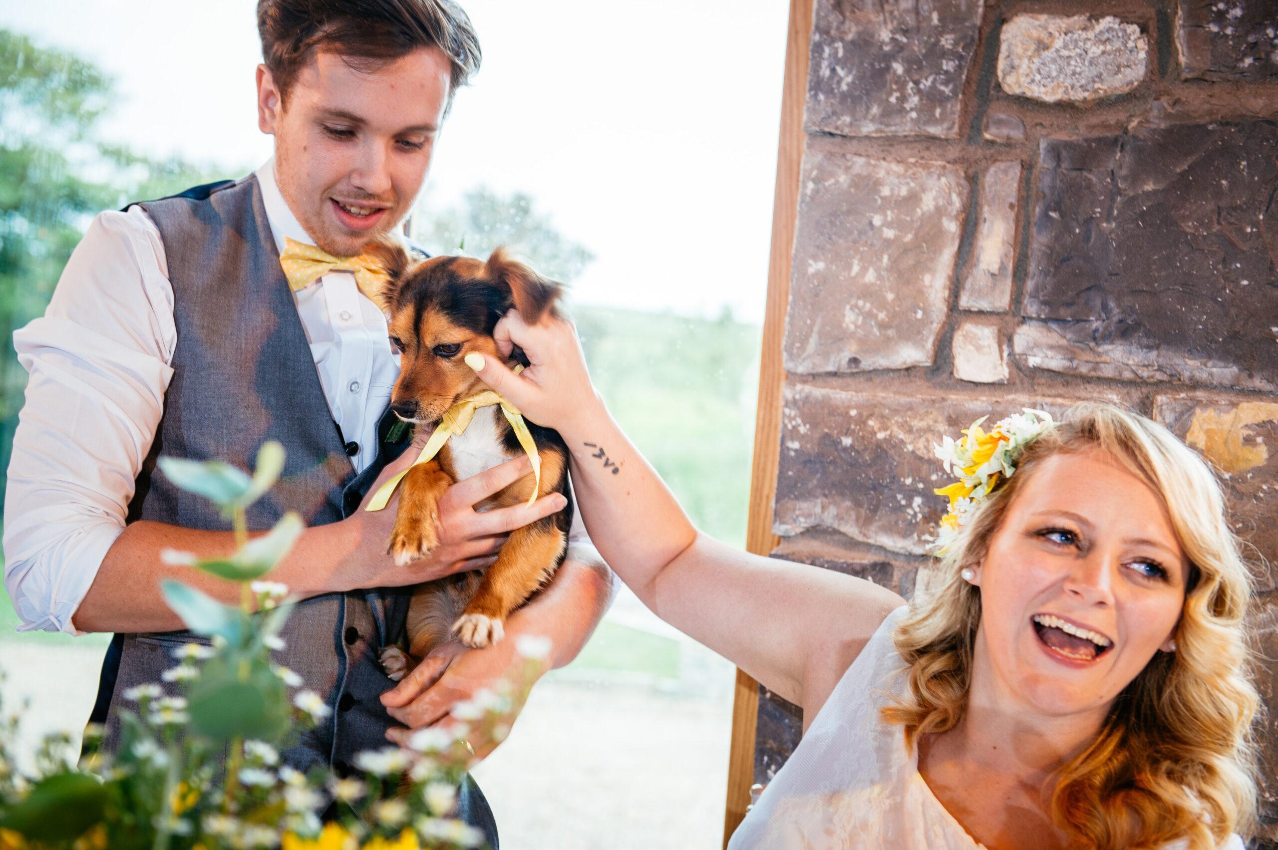 Our Dog Friendly Wedding at Rosedew Farm - Dog Furiendly