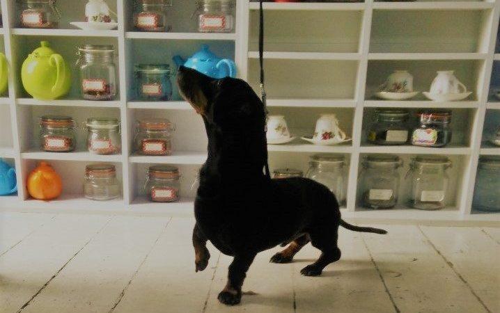 Seth's Day Out in Dog Friendly Pwllheli - Dog Furiendly