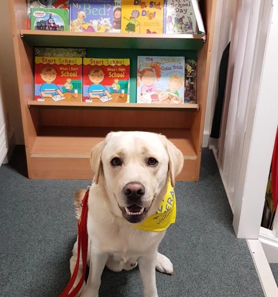 Arlo's Experience on Becoming a Therapy Dog - Dog Furiendly
