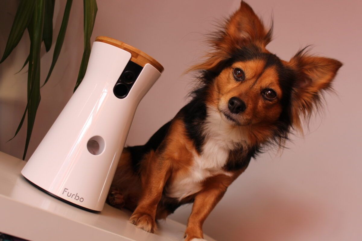 Why We Love Our New Dog Camera Furbo - Dog Furiendly