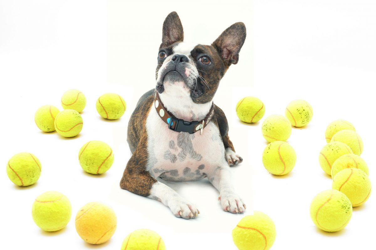 Enrichment Games for Dogs