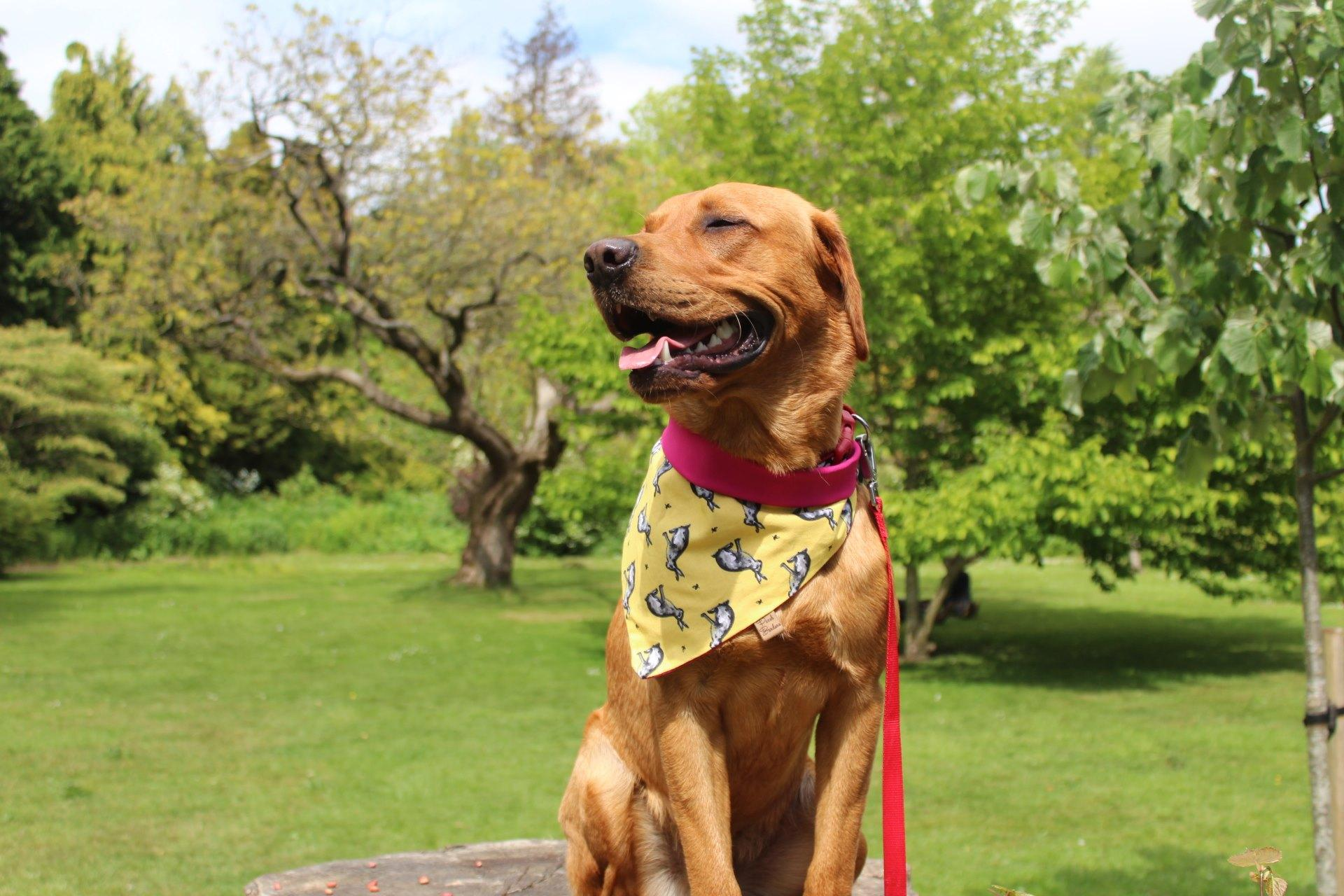 How to Upcycle and Create Your Own Pooch Bandana - Dog Furiendly