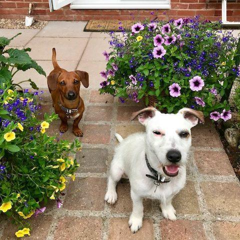 Creating a Dog Friendly Garden At Home