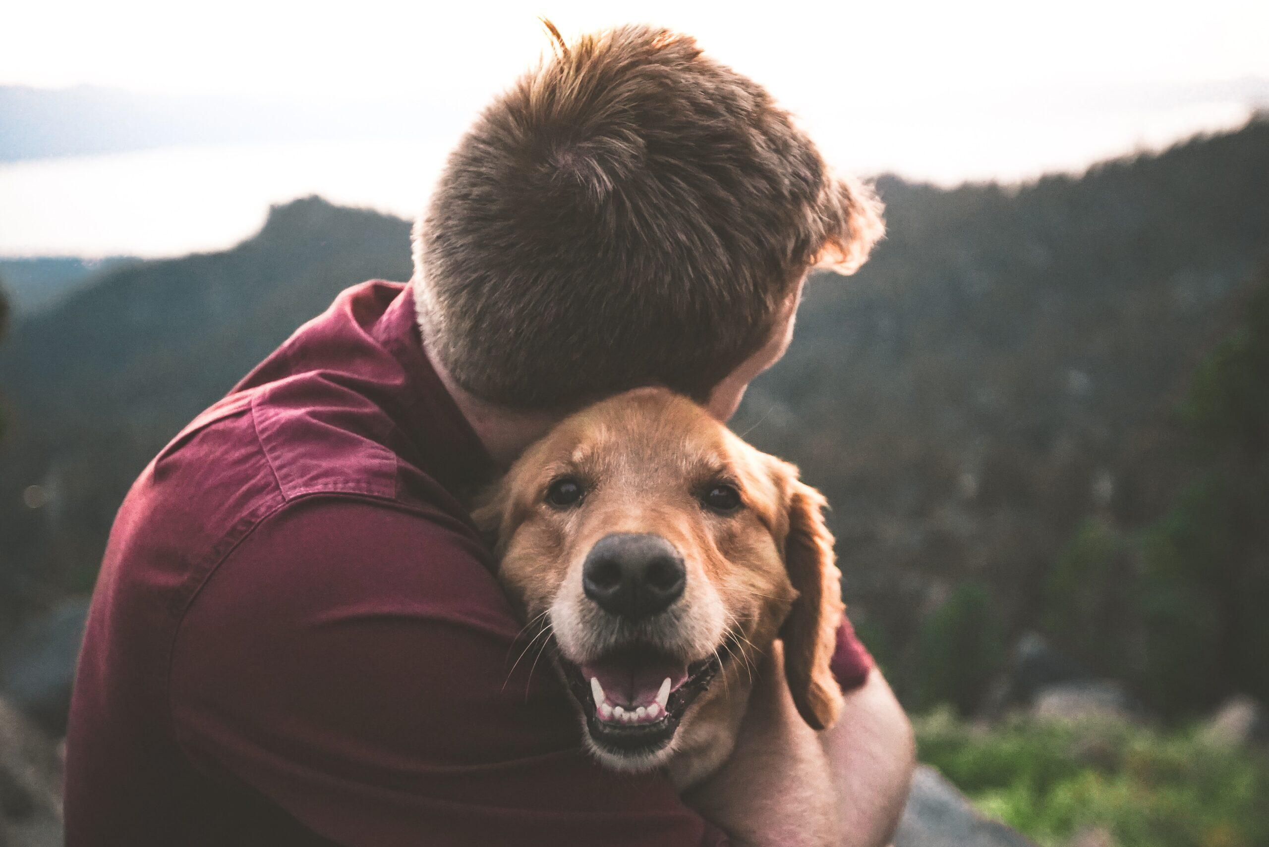 Why Everyone Needs a Dog in Their Life - Dog Furiendly