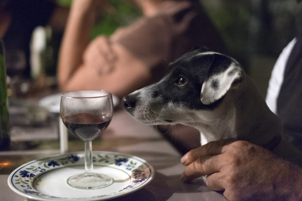 Dog Friendly Wineries - Dog Furiendly