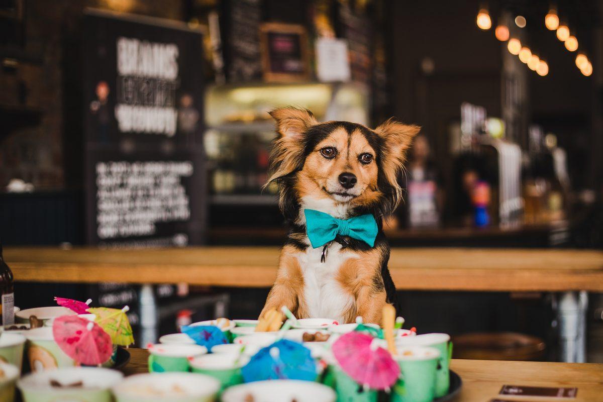 Dog Friendly Search Engine - TripAdvisor For Dog Owners