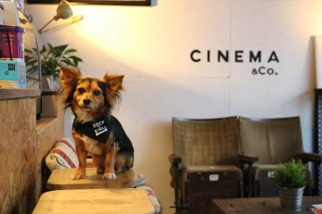 Dog Friendly Cinema - Dog friendly threatre - Dog Furiendly