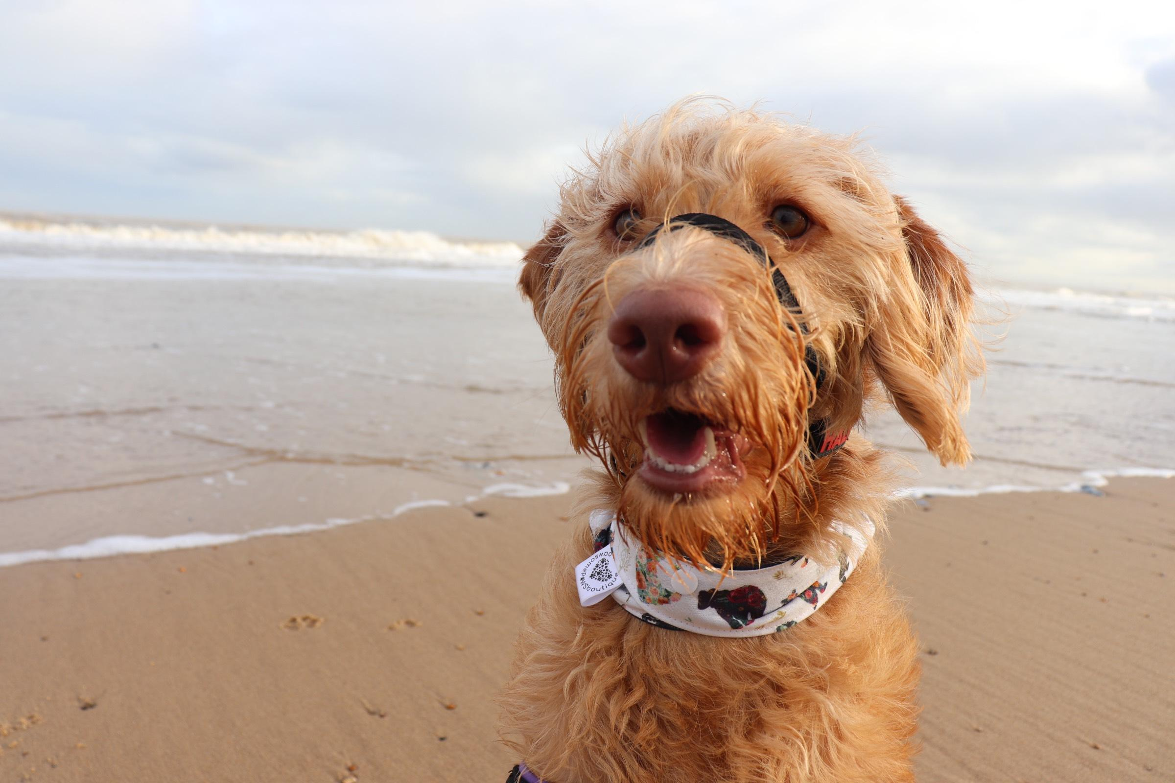 Duchess' Five Favourite Dog Friendly Beaches in Norfolk - Dog Furiendly