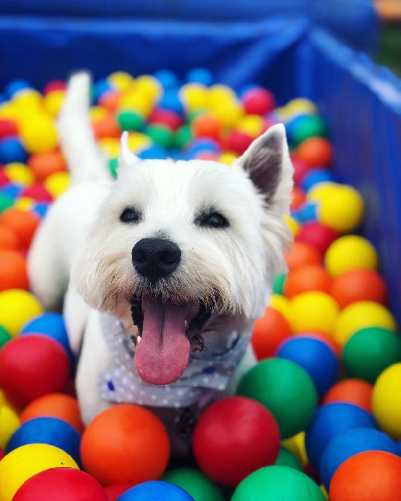 Bark n Bounce