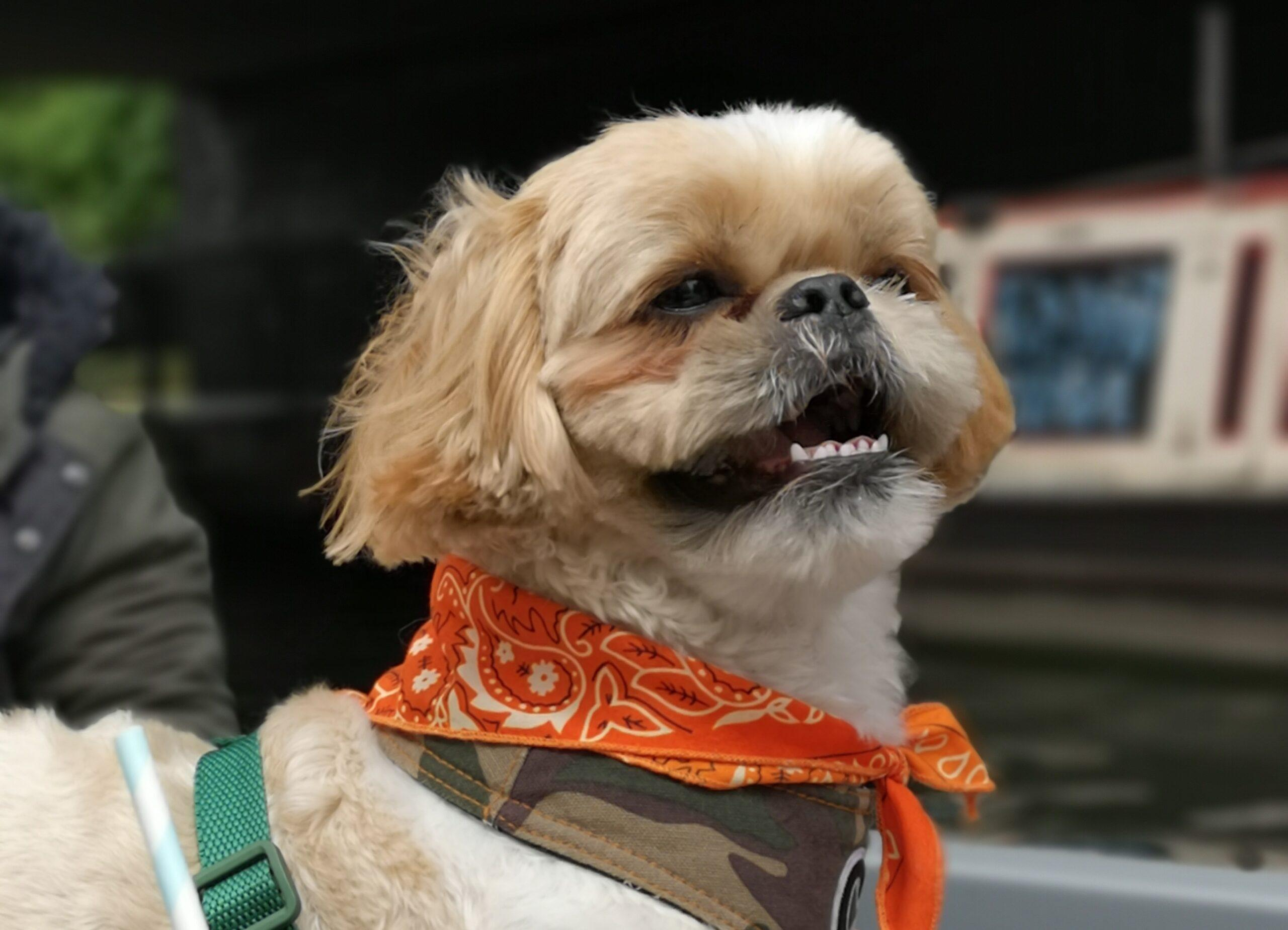 Dog Friendly Boat Trip On Regent's Canal