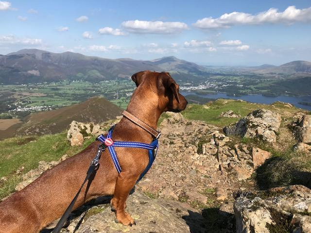 Dog Friendly Adventures in the Northern Lake District