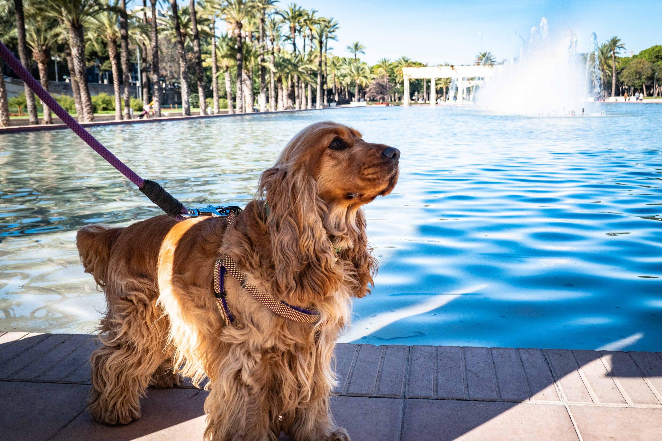 How to travel with your dog?