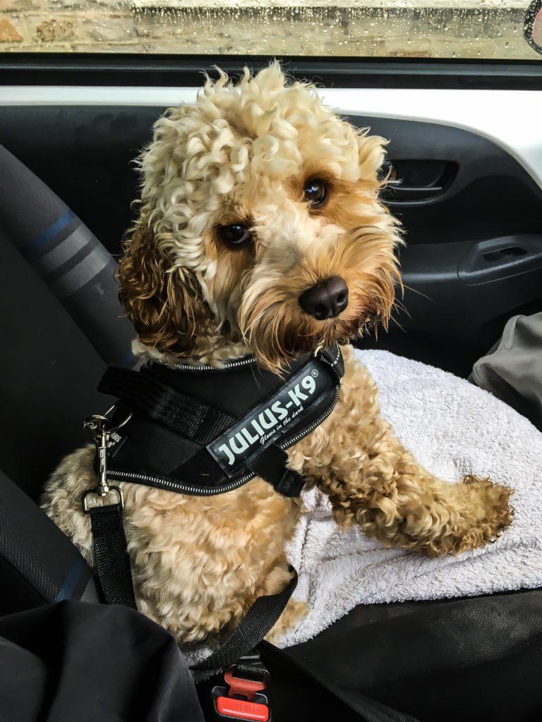 Vets4pets Blackwood Pets At Home Dog Furiendly