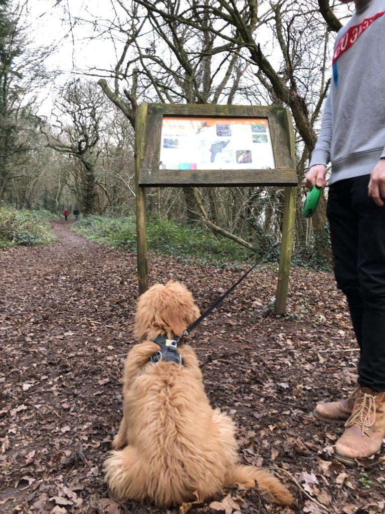 Priors Wood Walk