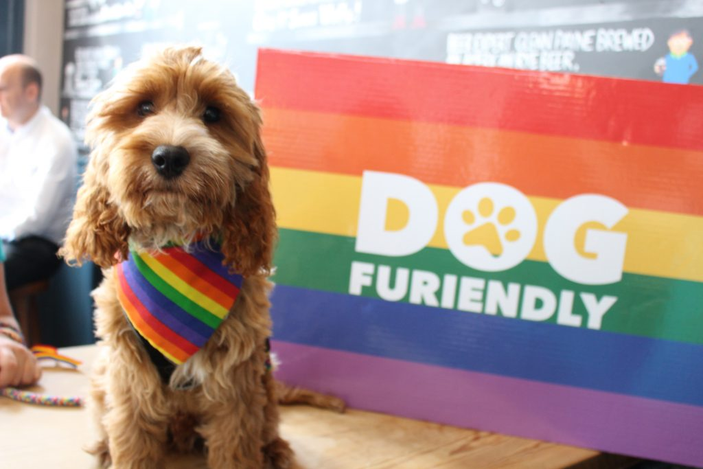 Pride Party For Dogs and Their Owners Coming to Cardiff