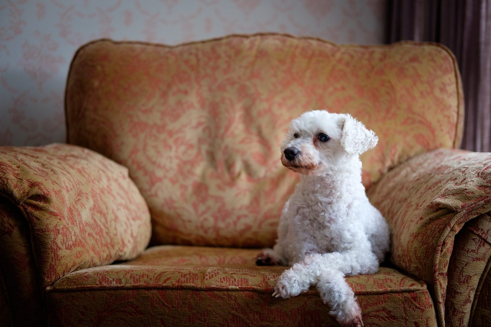 Our Guide to Dog Friendly Manchester City Centre