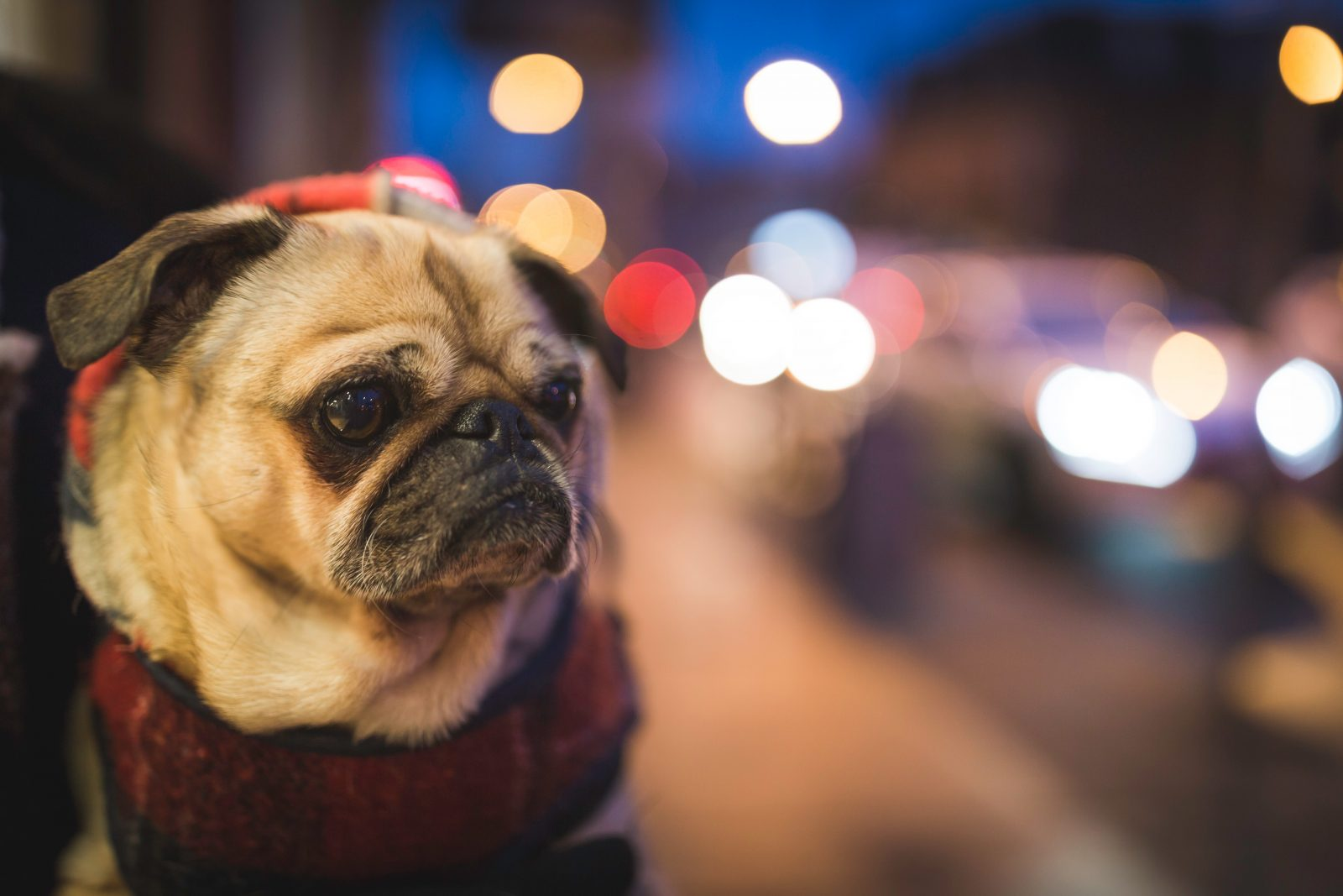 Our Guide to Dog Friendly Liverpool City Centre
