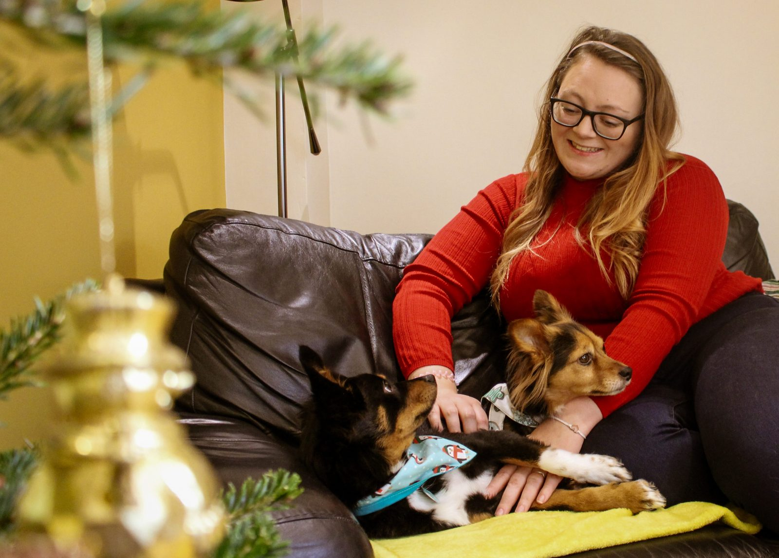 Dog Friendly Christmas at Old Lanwarnick Cottage