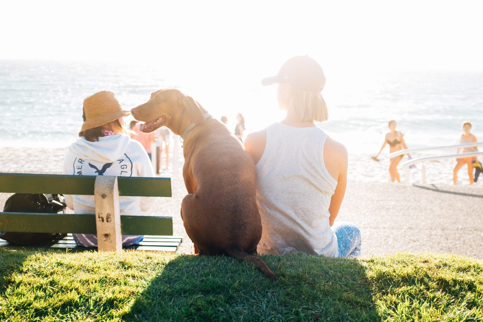 The Best Spots for Dog Friendly Holidays