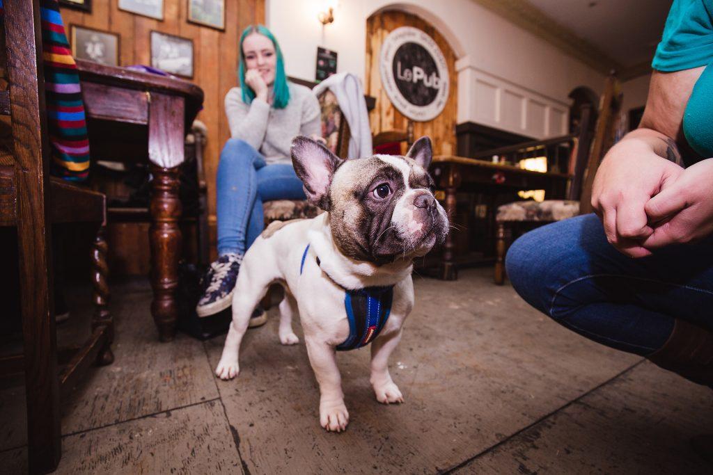 dog friendly newport Le Pub