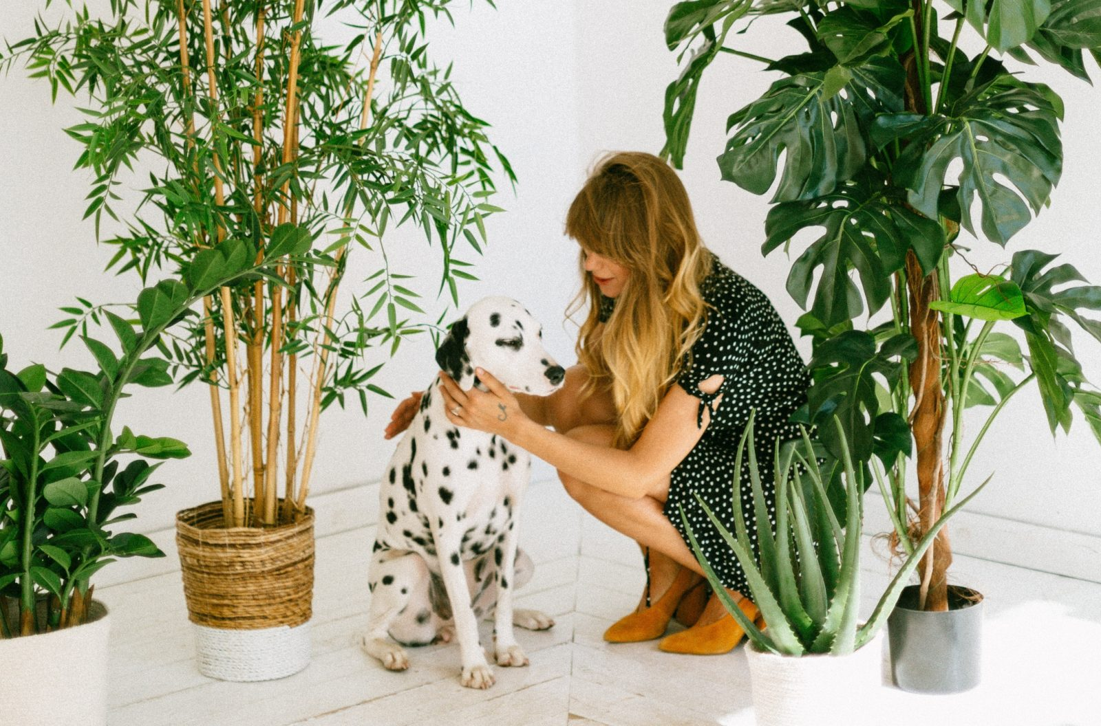 Our Top 15 Dog Friendly Vegan Finds Across The UK