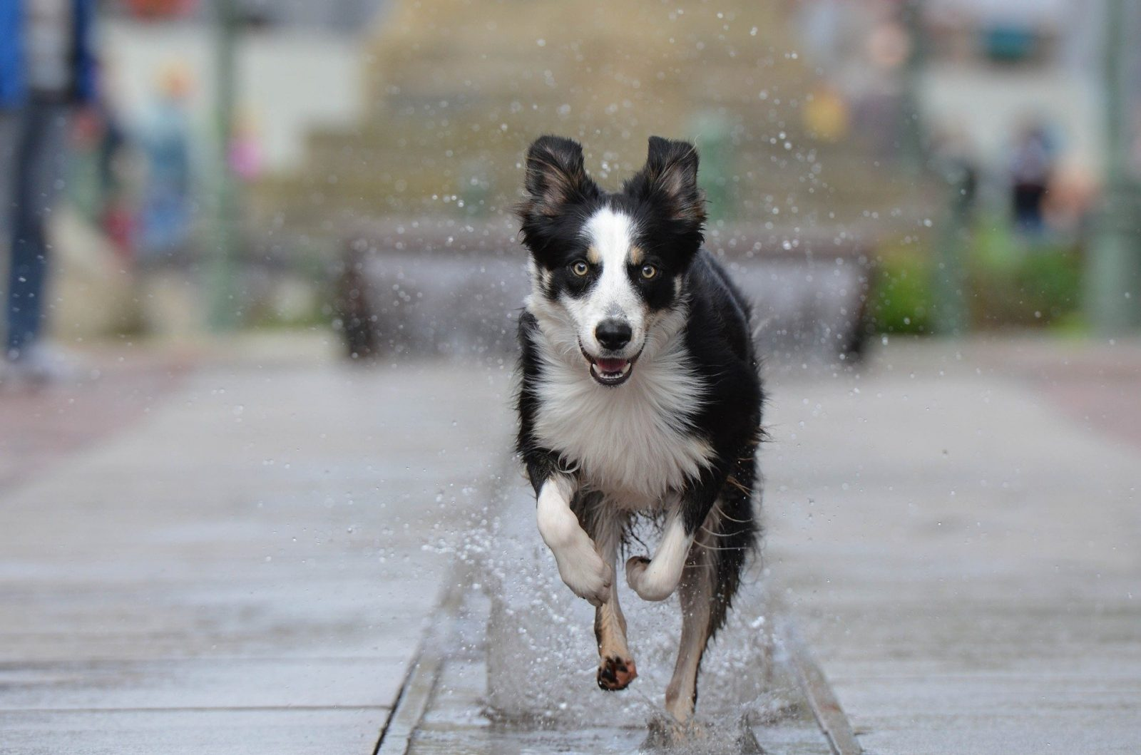 Our Guide to Dog Friendly Edinburgh City Centre