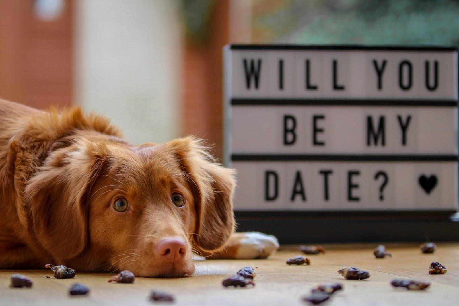 12 Dog Friendly Date Ideas