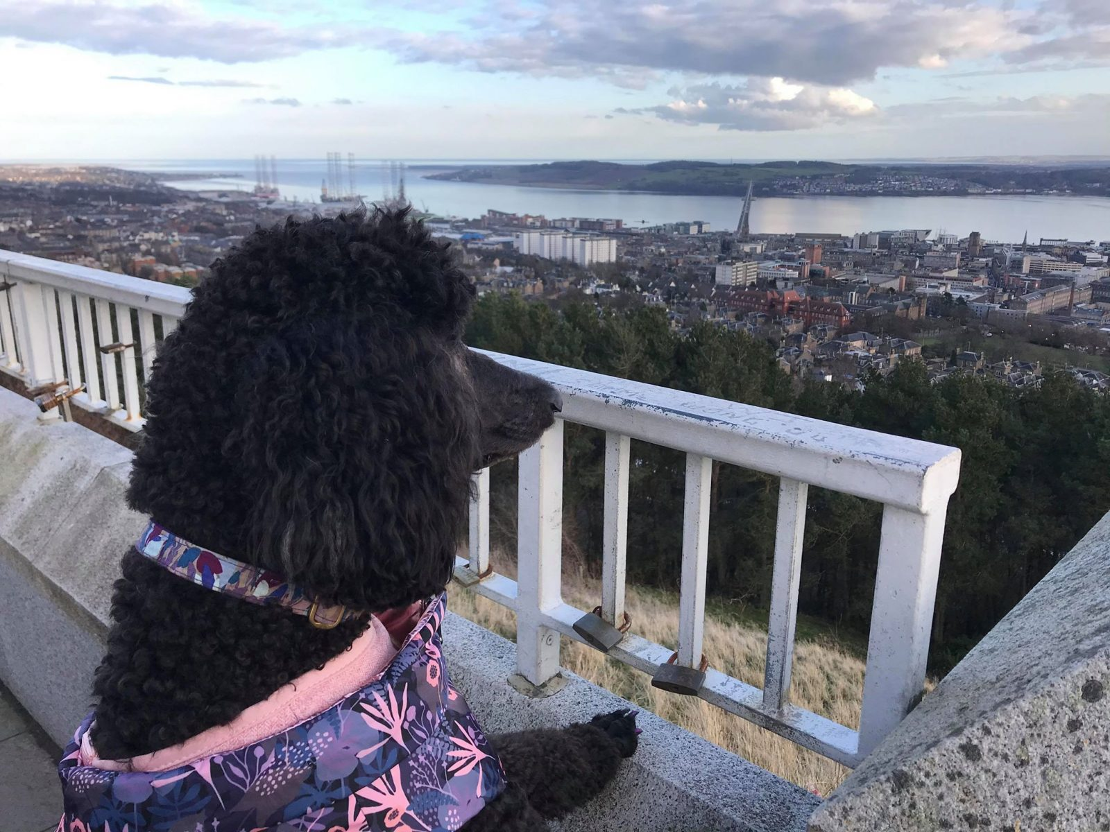 Our Guide to Dog Friendly Dundee City Centre