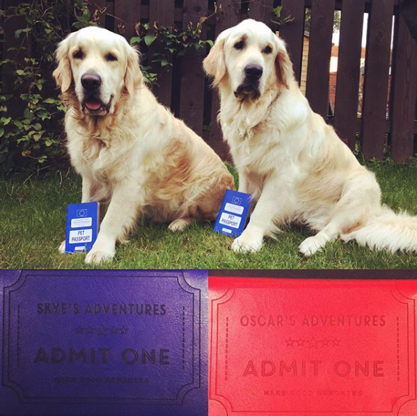 Two golden retrievers with their pet passports ready to travel to Europe.
