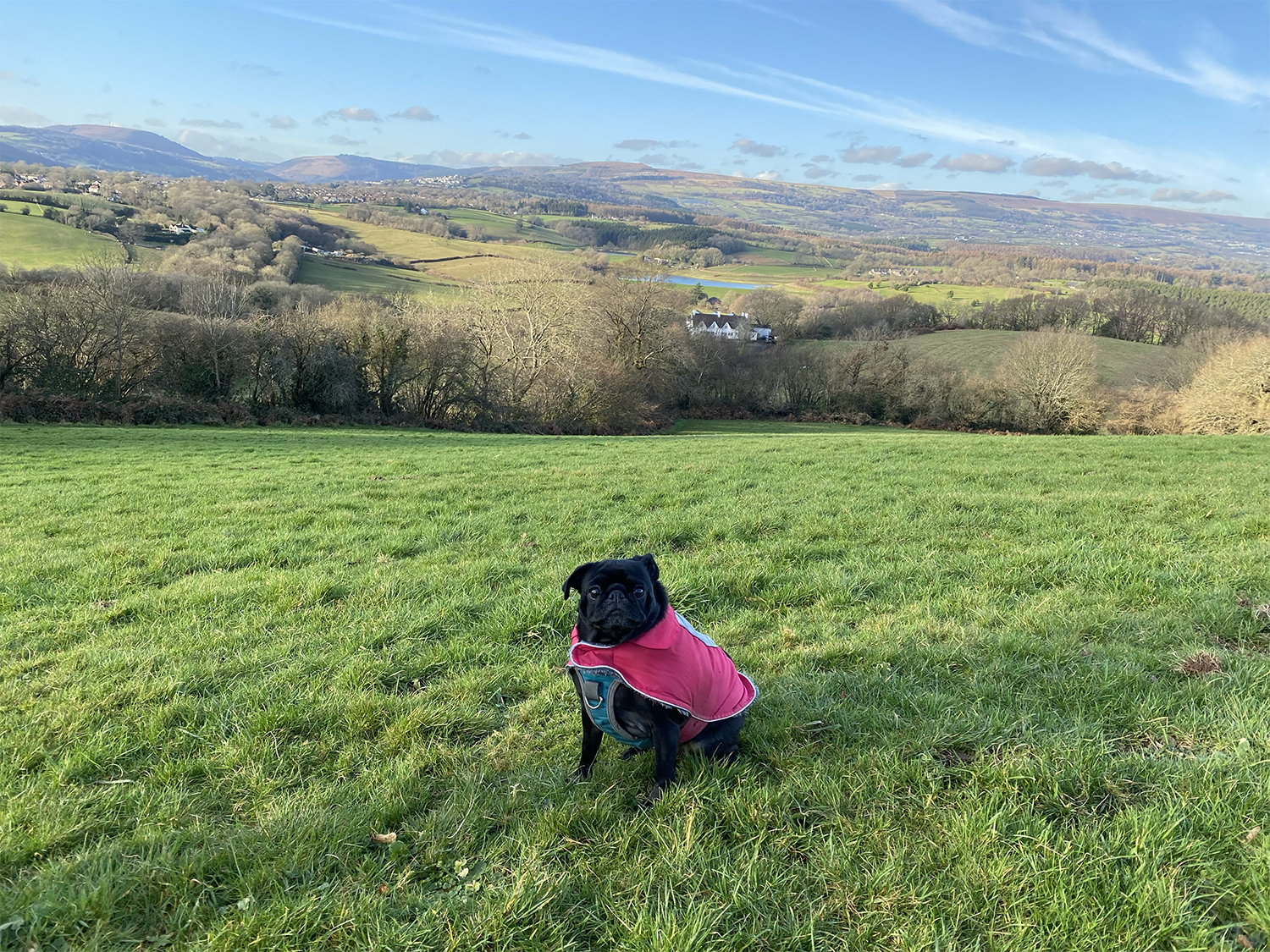 Pebbles' Guide To Dog Friendly Newport