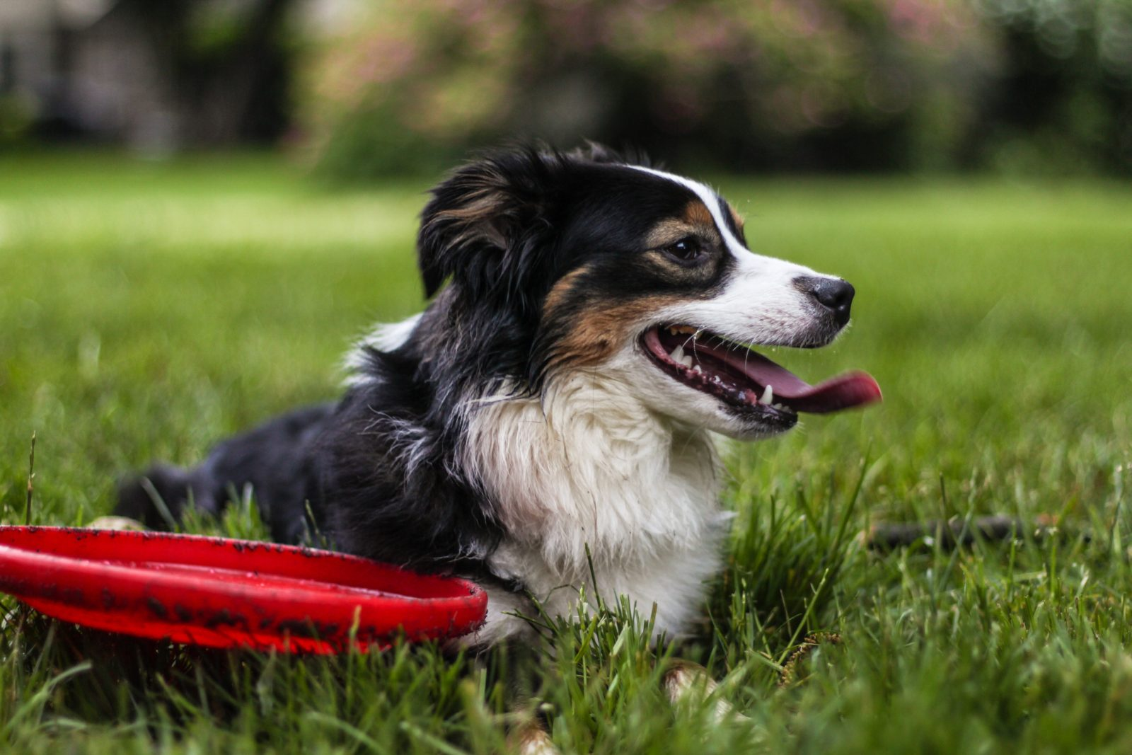 Garden Games To Play With Your Dog