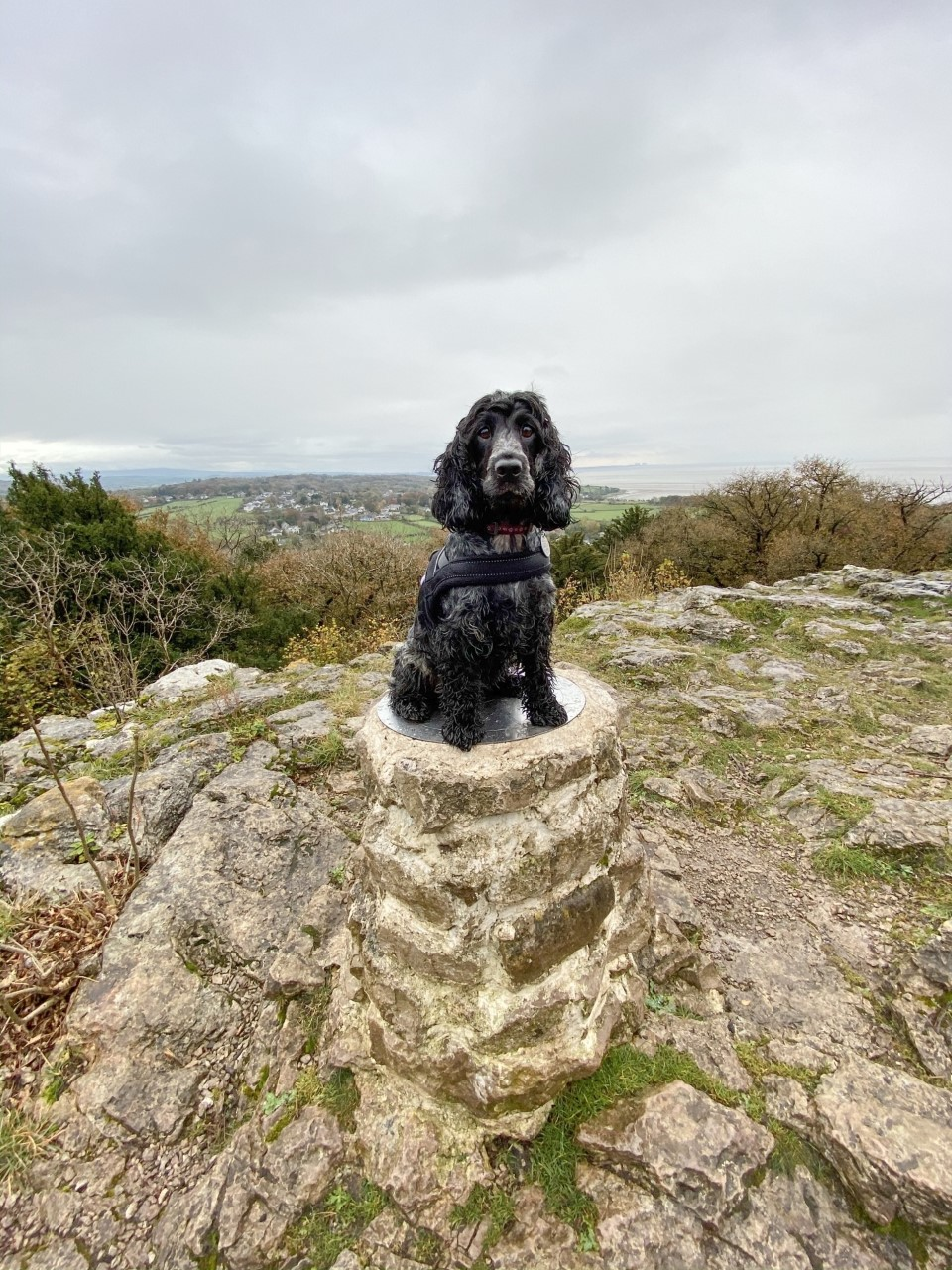 Top Tips for Hiking With Your Dog!