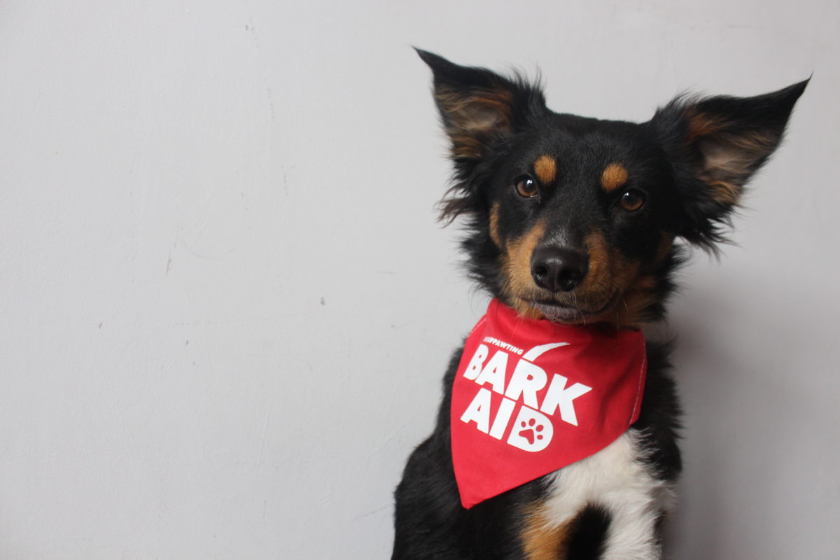 Tails.com joins 'Bark Aid' campaign for COVID-19 Relief