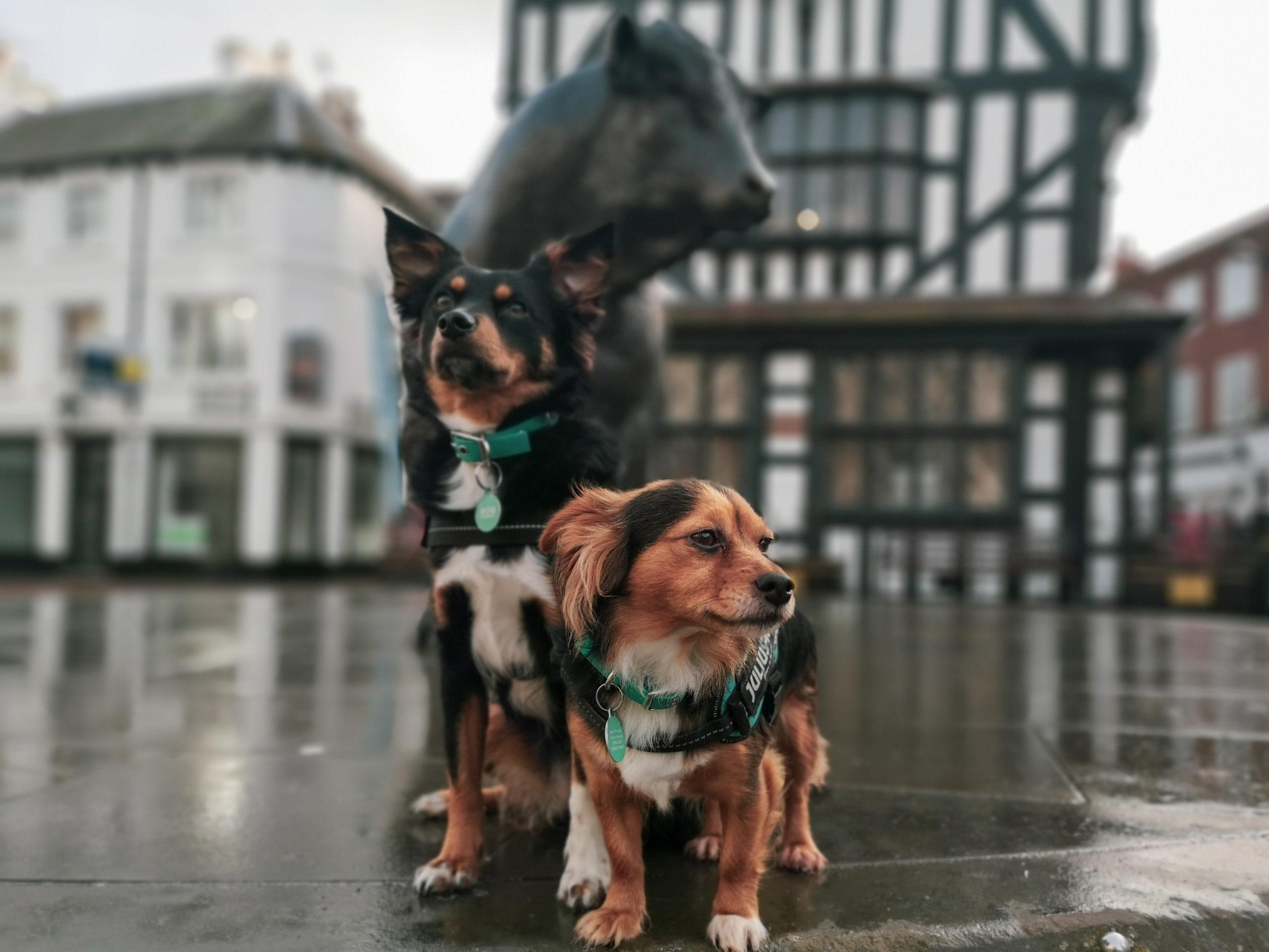 Our Guide to Dog Friendly Hereford City