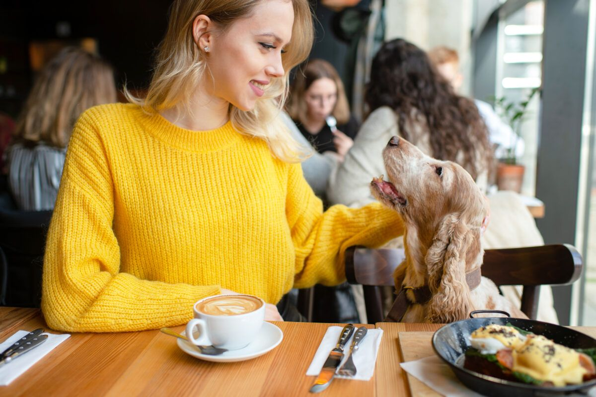 Attracting more doggy customers with Instagram